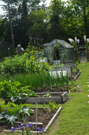 whitchurch-on-thames > whitchurch and district allotment society